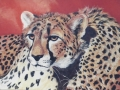cheetah-art-julie-woods