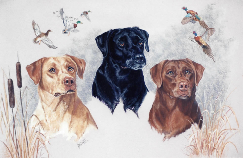 3-canine-labs-julie-woods