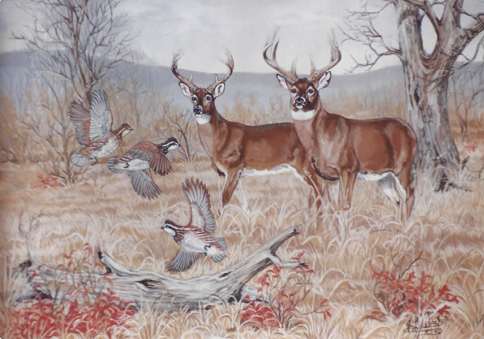 deer-commissioned-art-julie-woods