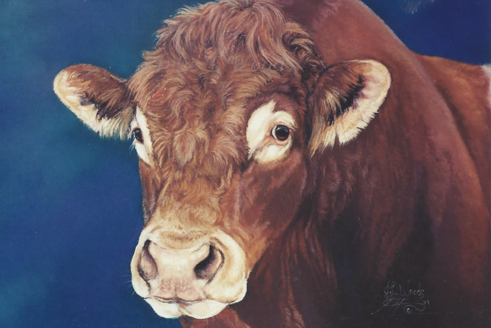 limosine-bull-by-julie-woods-art