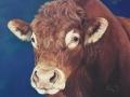 limosine-bull-by-julie-woods-art