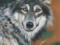 wolf-julie-woods