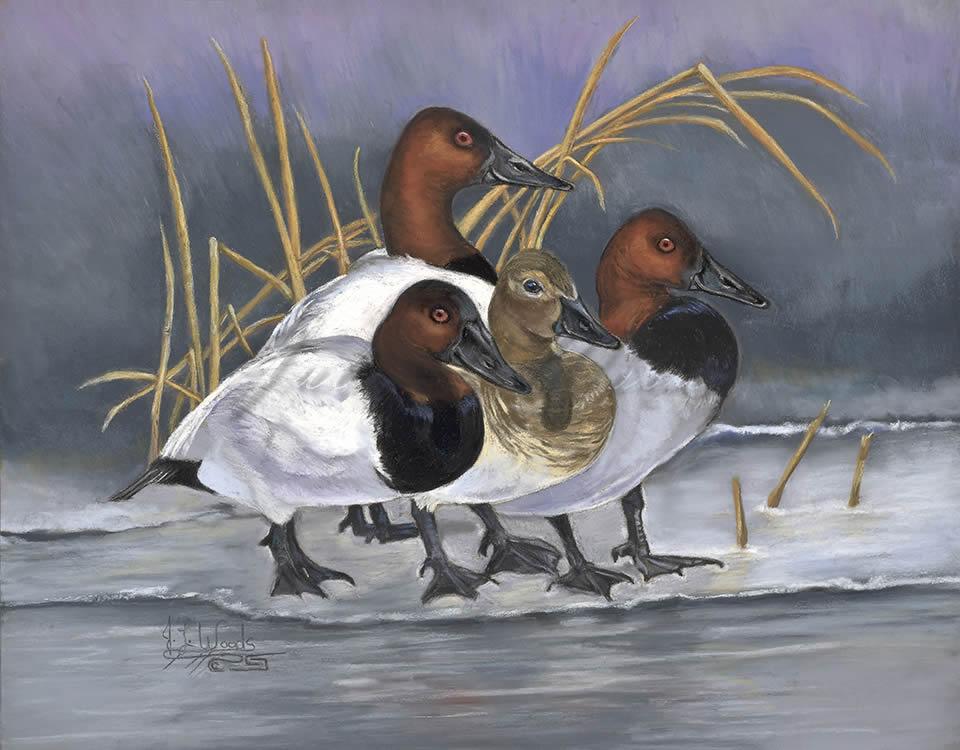 CanvasbackDucks